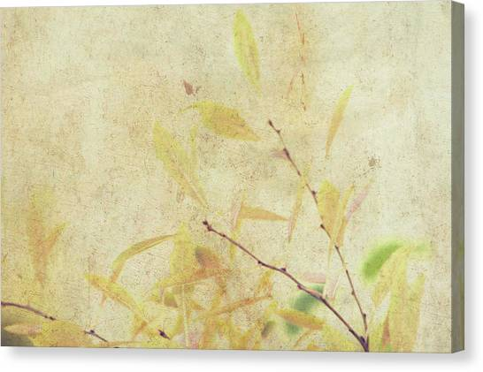 Cherry Branch On Rice Paper Canvas Print