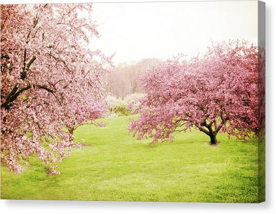 Tree Blossoms Canvas Print - Cherry Confection by Jessica Jenney