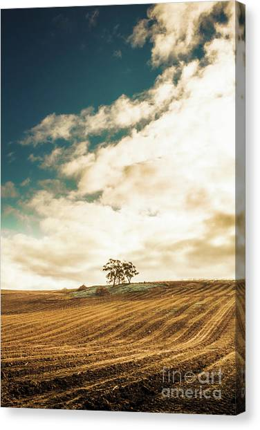 Rural Canvas Print - Cherry Farm In The Sewing by Jorgo Photography - Wall Art Gallery