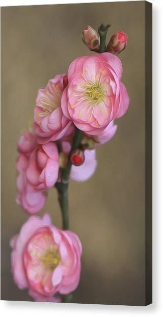 Cherry Flower Canvas Print