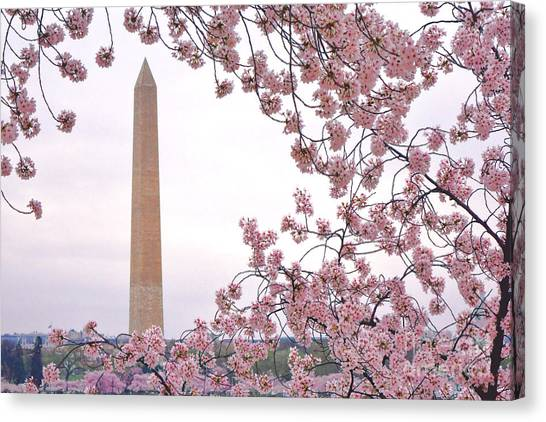 Washington Monument Canvas Print - Cherry Washington by Olivier Le Queinec
