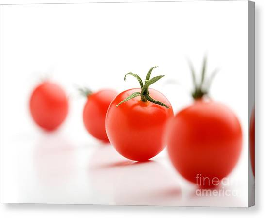Tomato Canvas Print - Cherry Tomatoes by Kati Finell