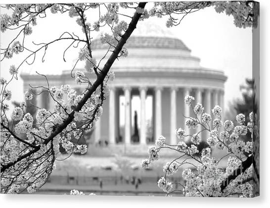 Jefferson Memorial Canvas Print - Cherry Tree And Jefferson Memorial Elegance  by Olivier Le Queinec