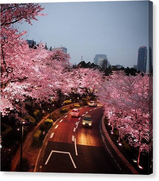 Japanese Canvas Print - #cherry_blossoms #tokyo #japan by Moto Moto