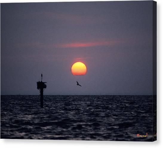 Chesapeake Bay Osprey 14o Canvas Print