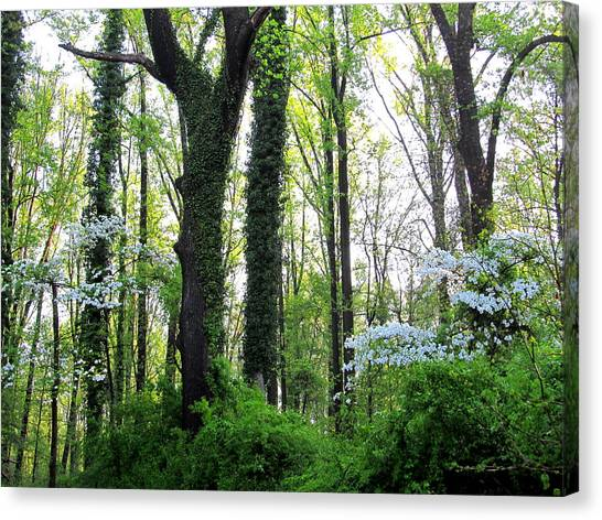 Chesapeake Oldgrowth Forest Canvas Print
