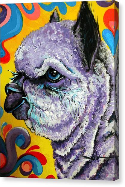 Cheshire Alpaca  Canvas Print