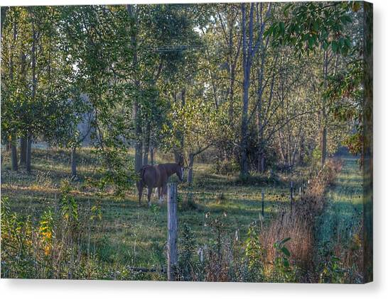 1009 - Chestnut Horse Among The Trees Canvas Print
