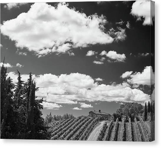 Chianti Vineyards Canvas Print