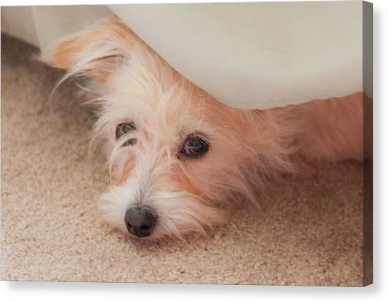 Chica In Hiding Canvas Print