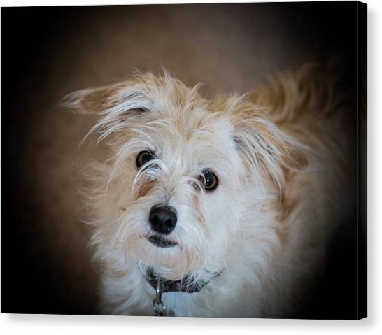 Chica On The Alert Canvas Print
