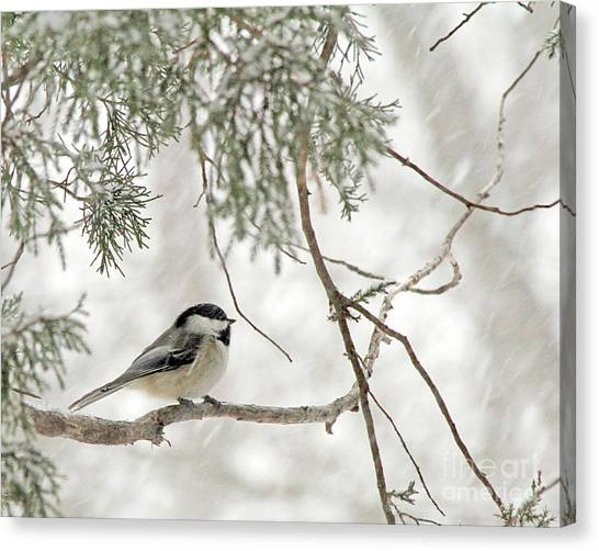 Chicadee In A Snow Storm  Canvas Print