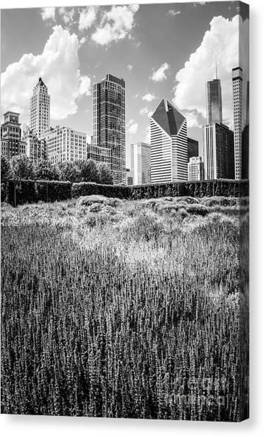 Chicago Black White Canvas Print - Chicago Skyline Lurie Garden Black And White Photo by Paul Velgos