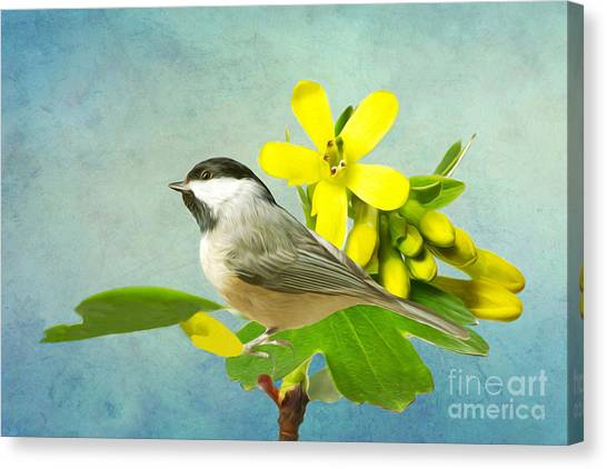 Chickadee Canvas Print - Chickadee And Flowers by Laura D Young