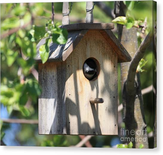 Chickadee In Birdhouse Canvas Print