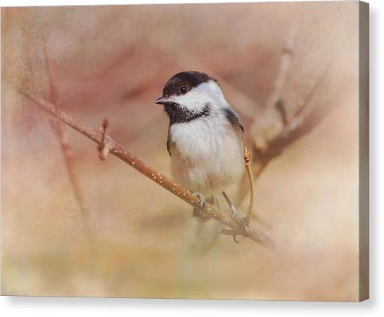 Chickadees Canvas Print - Chickadee In Spring by Susan Capuano