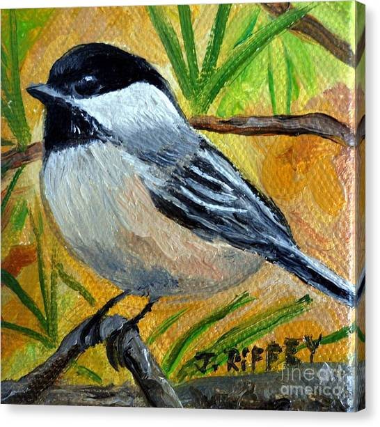 Chickadee In The Pines - Birds Canvas Print