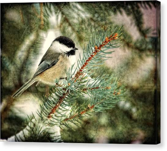Chickadee On A Snowy Tree Canvas Print