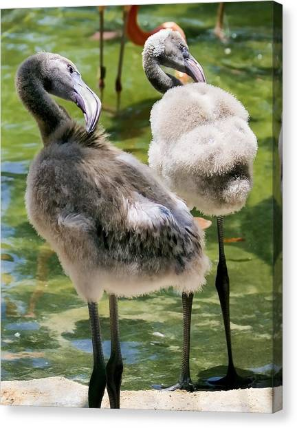 Chicks Hangin' Out Canvas Print