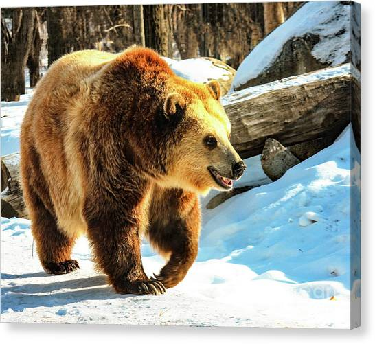 Chief Walking Bear Canvas Print