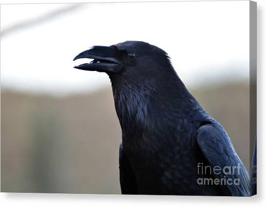 Chihuahua Raven Profile Canvas Print