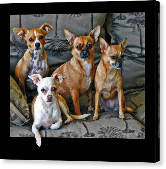 Chihuahuas Hanging Out Canvas Print