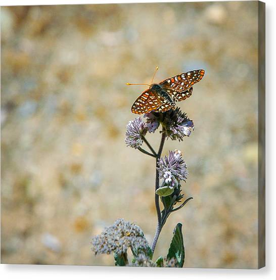 Canvas Print featuring the photograph Chillin' In Color by T Brian Jones