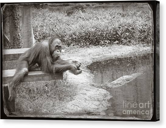 Canvas Print featuring the photograph Chillin by Sandy Adams