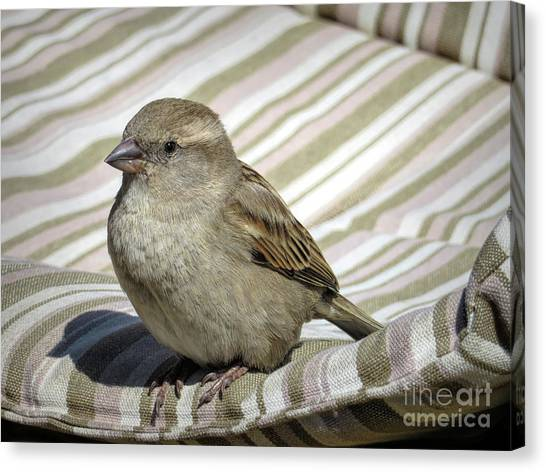 Crossbills Canvas Print - Chilling In Majorca by Elisabeth Lucas