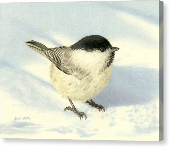 Small Birds Canvas Print - Chilly Chickadee by Sarah Batalka