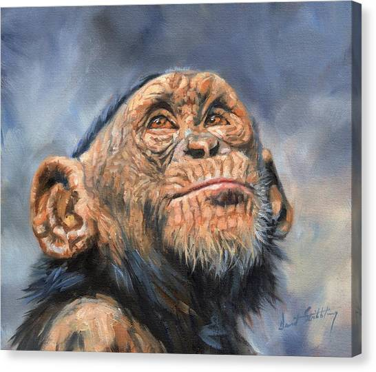 Chimpanzees Canvas Print - Chimp by David Stribbling