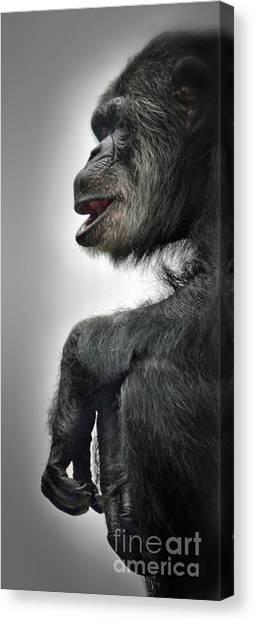 Chimpanzee Profile Vignetee Effect Canvas Print