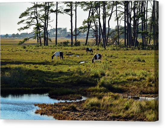 Chincoteague Ponies Canvas Print