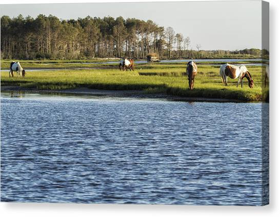Canvas Print featuring the photograph Chincoteague Ponies On Assateague Island by Belinda Greb