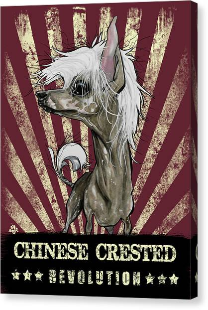 Chinese Crested Revolution Canvas Print