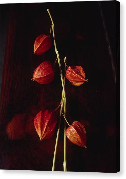 Chinese Lanterns Canvas Print by Art Ferrier