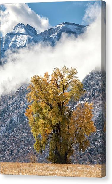 Canvas Print featuring the photograph Chipeta And Cottonwood by Denise Bush
