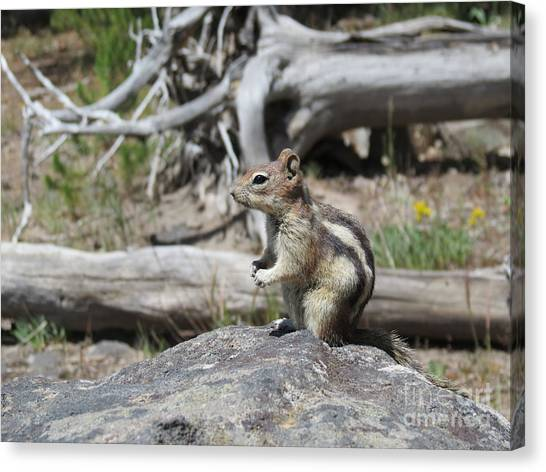 Chipmunk At Yellowstone Canvas Print