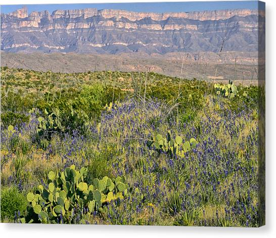 Chisos Mountains Canvas Print