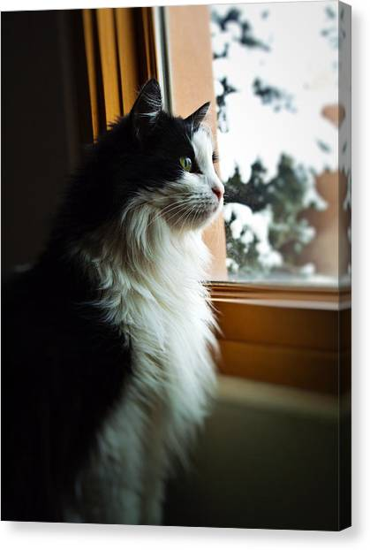 Chloe In Winter Window Canvas Print