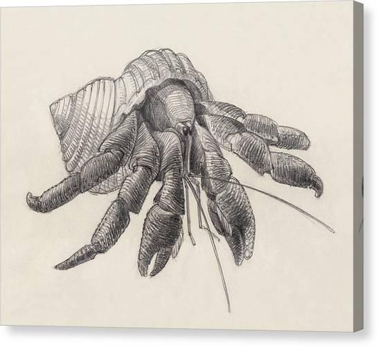 Chocolate Hermit Crab Canvas Print