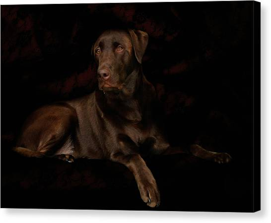 Chocolate Lab Dog Canvas Print