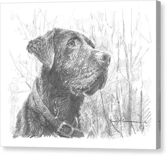 Chocolate Labrador In Woods Drawing Canvas Print by Mike Theuer