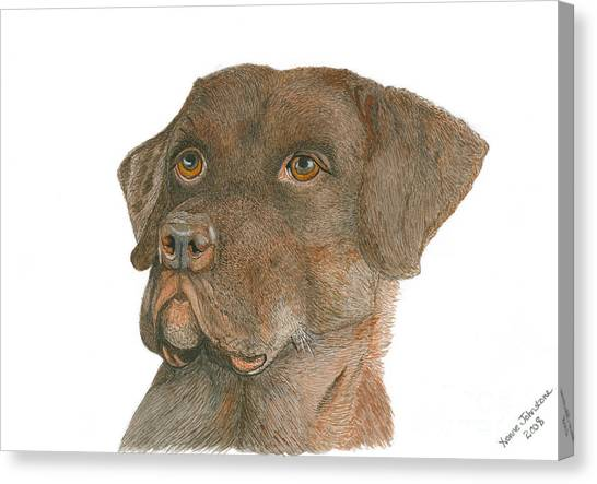 Chocolate Labrador Canvas Print