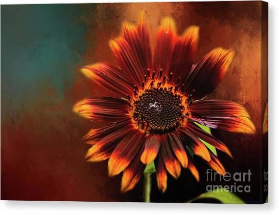 Chocolate Sunflower Canvas Print
