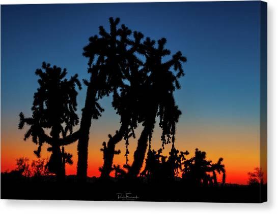 Cholla Silhouettes Canvas Print