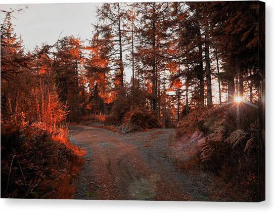 Choose The Road Less Travelled Canvas Print