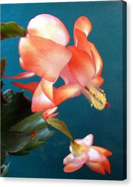 Canvas Print featuring the digital art Christmas Cactus by Deleas Kilgore