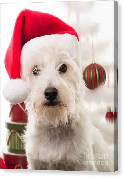 Elves Canvas Print - Christmas Elf Dog by Edward Fielding