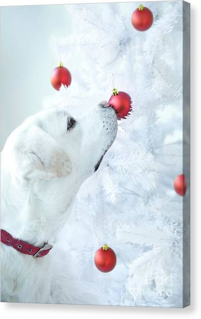 Yellow Lab Canvas Print - Christmas Lab by Diane Diederich